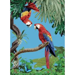 Affiche Aras 50x70