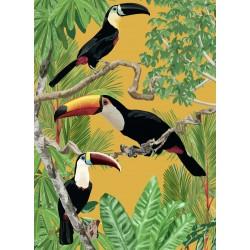 Affiche Toucans 50x70